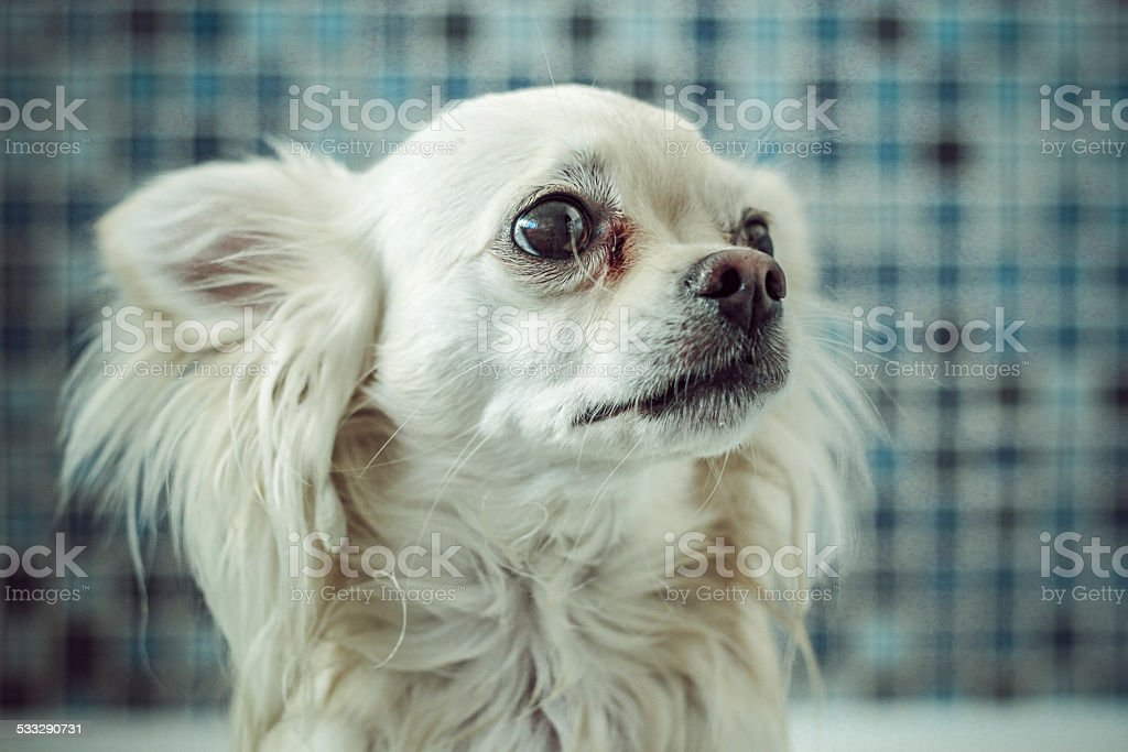 Petrified little dog stock photo