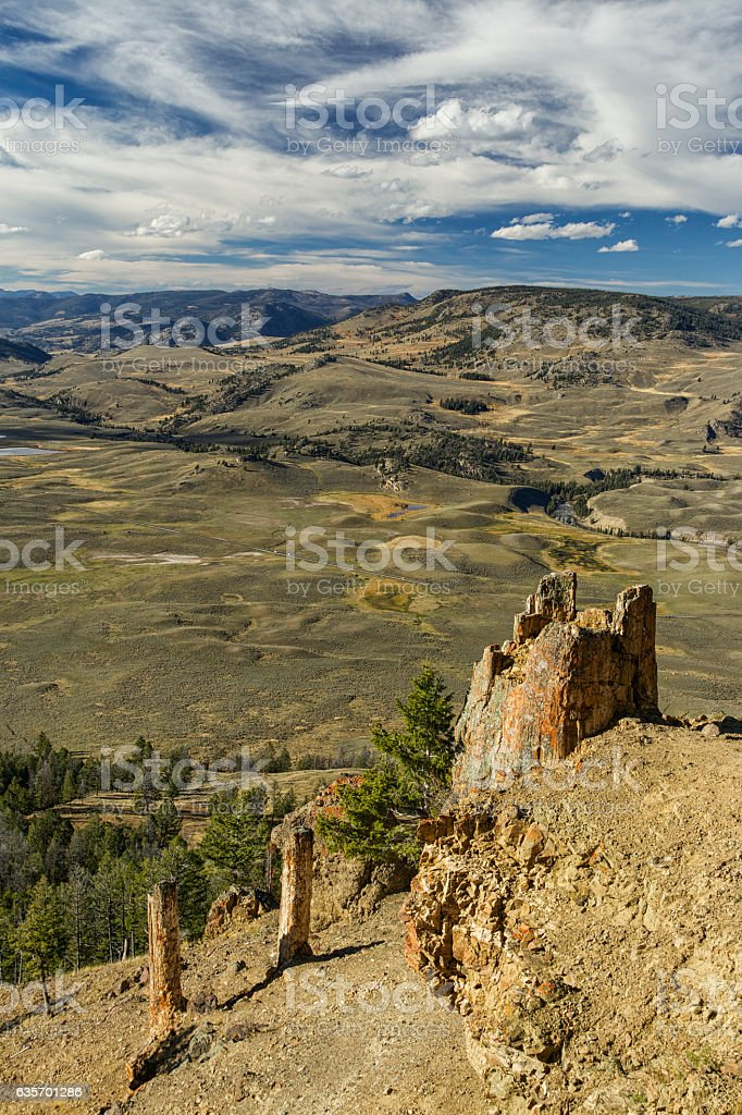 Petrified trees in Yellowstone National Park, Wyoming. royalty-free stock photo