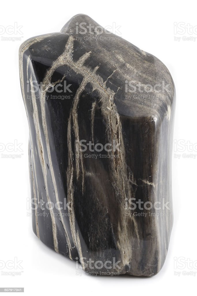 Petrified wood ancient piece black angle stock photo