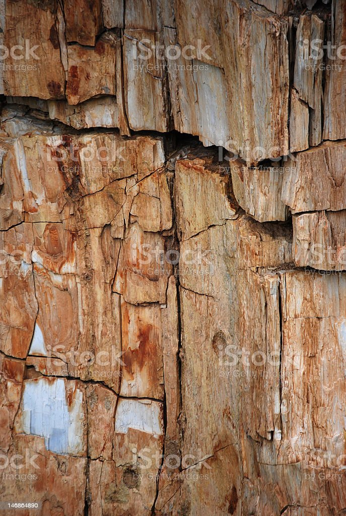 Petrified Wood Detail stock photo
