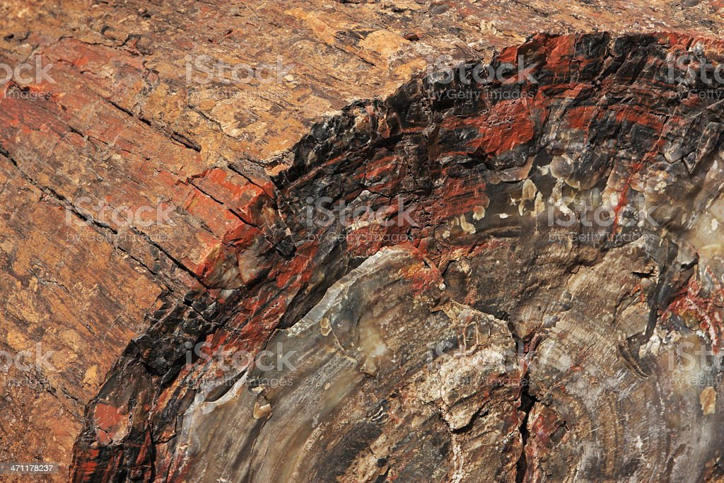 Petrified Wood Fossil Triassic Chinle Archaeology royalty-free stock photo