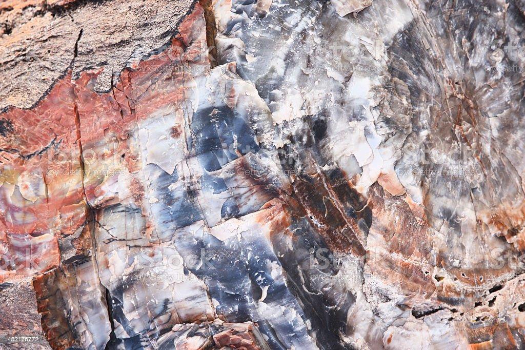 Petrified Wood Fossils Quartz Crystals stock photo