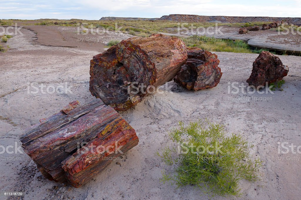 Petrified wood in desert stock photo