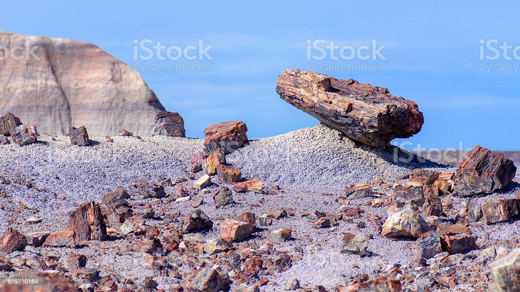 Petrified wood in desert stock photo