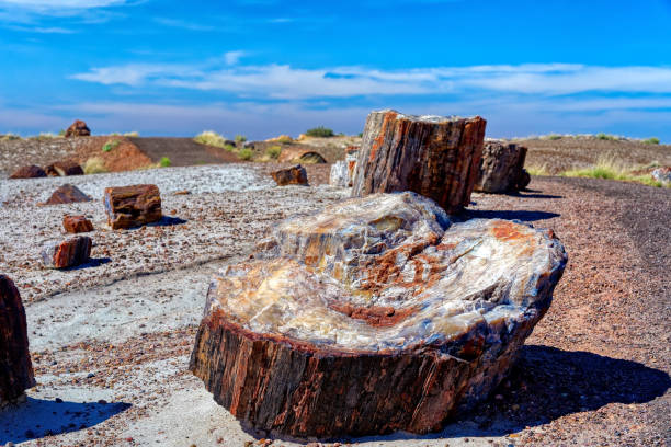 Petrified Wood in Petrified Forest National Park, Arizona stock photo
