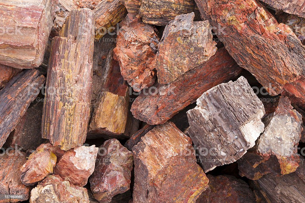 Petrified Wood in Pile, Fossil, Close-up, Background royalty-free stock photo