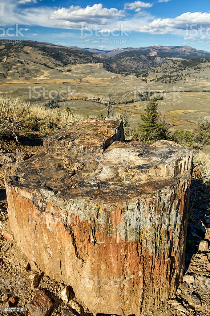Petrified wood in Yellowstone National Park, Wyoming. royalty-free stock photo