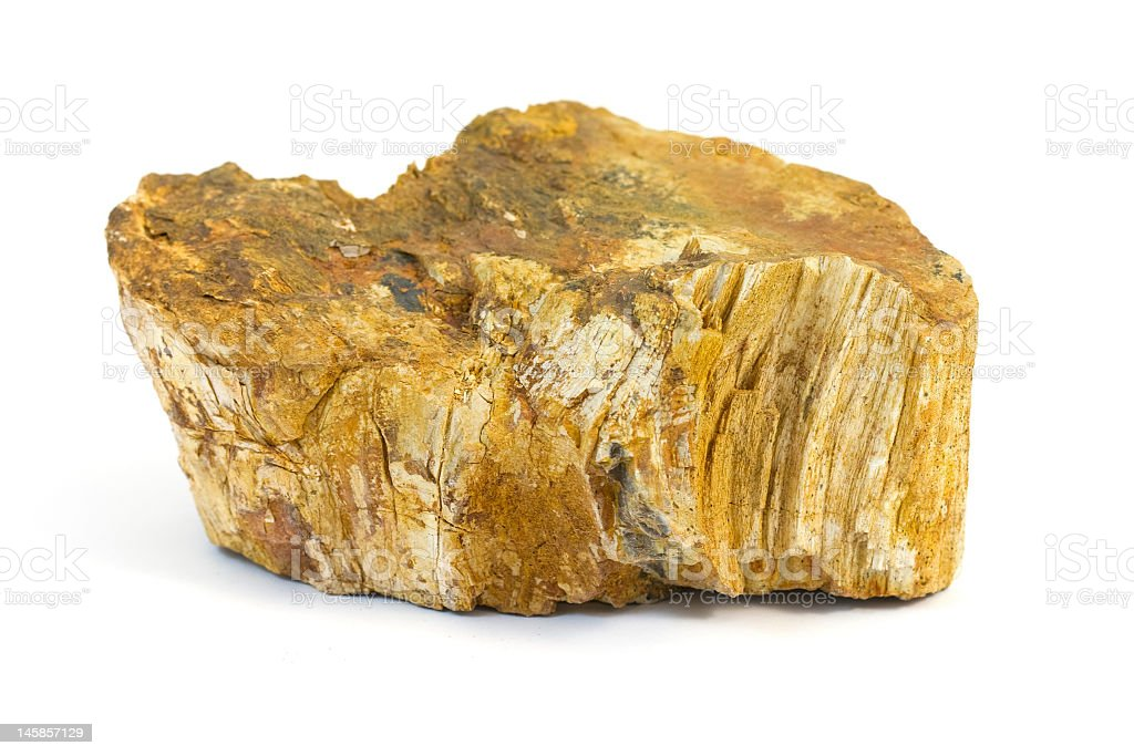 Petrified Wood Isolated stock photo