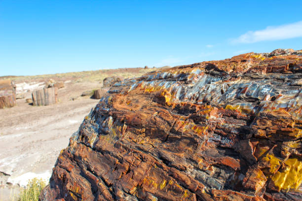 Petrified Wood located in The Petrified Forest National Park stock photo