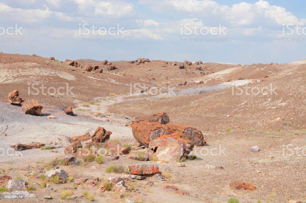 Petrified wood on  Arizona desert. stock photo