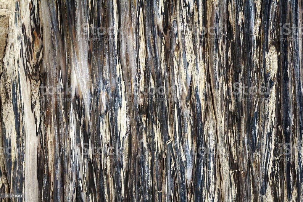 Petrified Wood stock photo