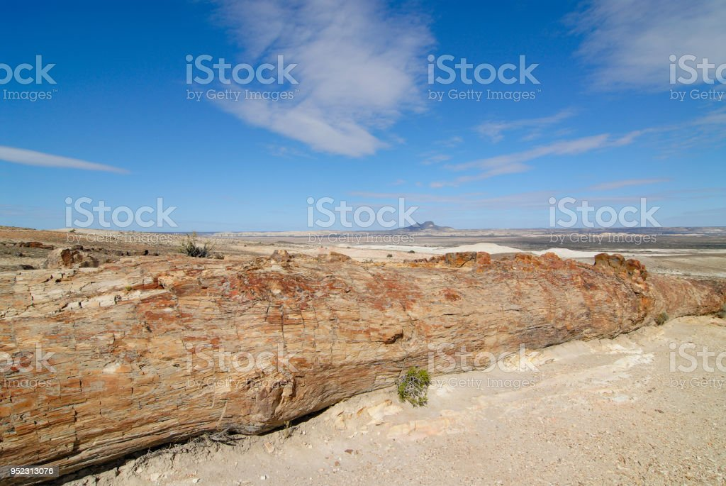 Petrified Woods in Patagonia stock photo