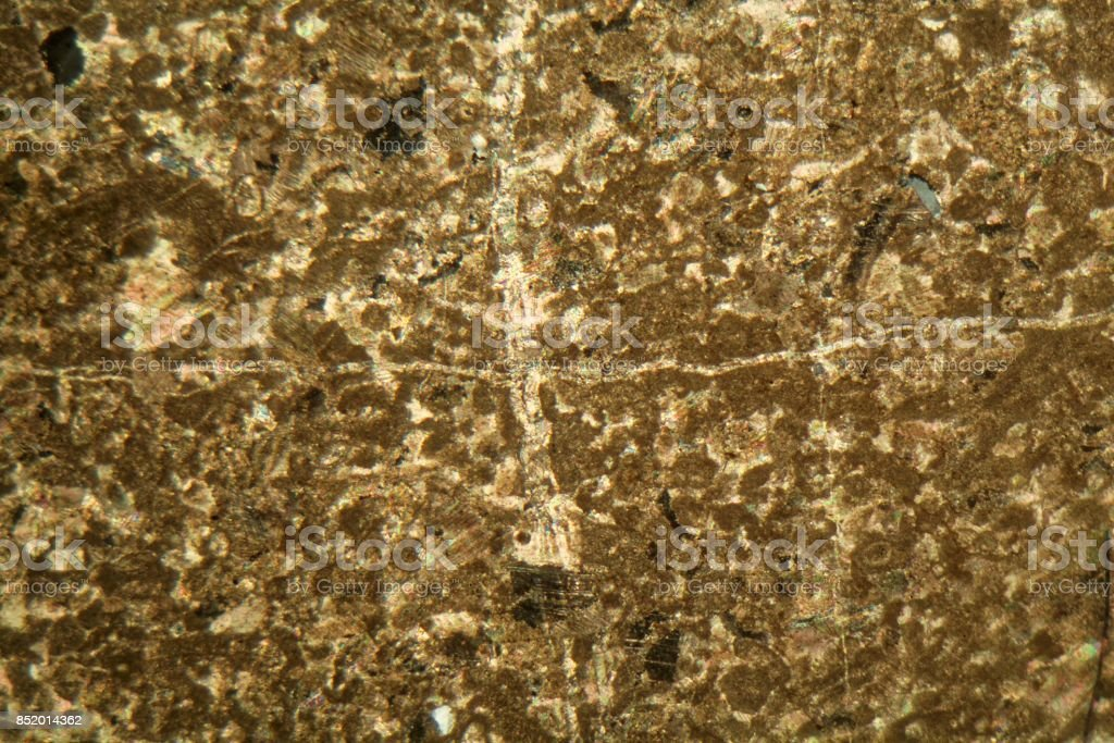 Petrographic thin section of a limestone of Permian age under the microscope stock photo