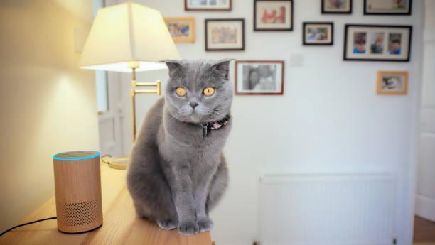 Animais de estimação e inteligência artificial - foto de acervo