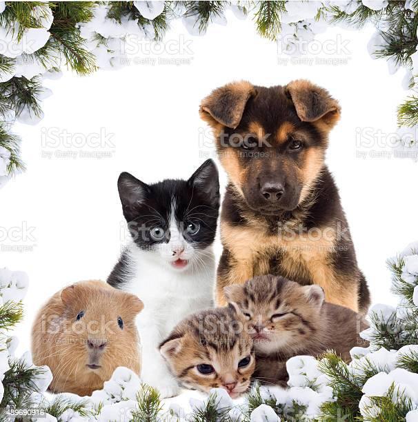 Pets and new year picture id489690916?b=1&k=6&m=489690916&s=612x612&h=zunaob9p9xlhmbkjpe7qwqkvkkqhf3bunoo6ahpof q=