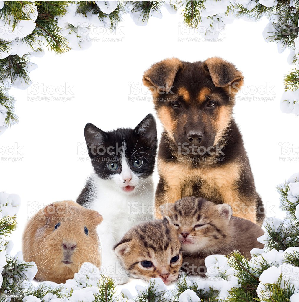 pets and New Year stock photo