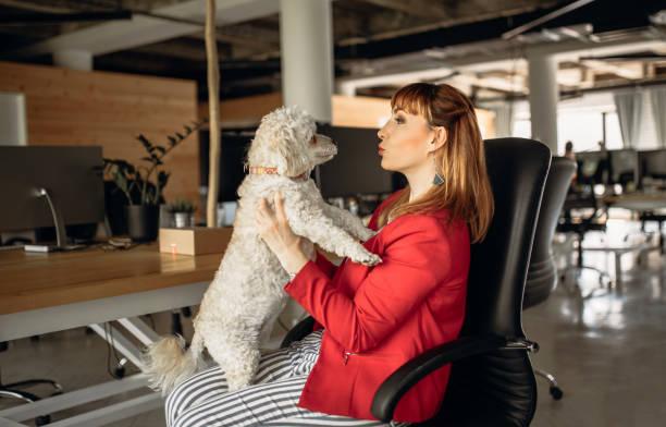 Haustiere werden im Büro willkommen geheißen – Foto
