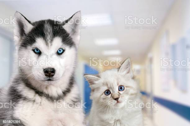 Pets at the veterinary clinic dog and cat in front of the blurred picture id831801284?b=1&k=6&m=831801284&s=612x612&h=94f8v m p clbspxlwfnllluqgbbiirvcrne7rs5hgs=