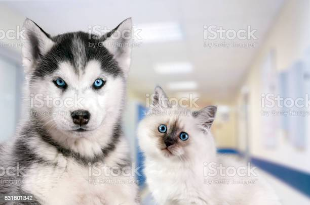 Pets at the veterinary clinic dog and cat in front of the blurred picture id831801342?b=1&k=6&m=831801342&s=612x612&h=cbwb0h57kxy4jr5susixf3iwyywqvwko3p48efizpxa=