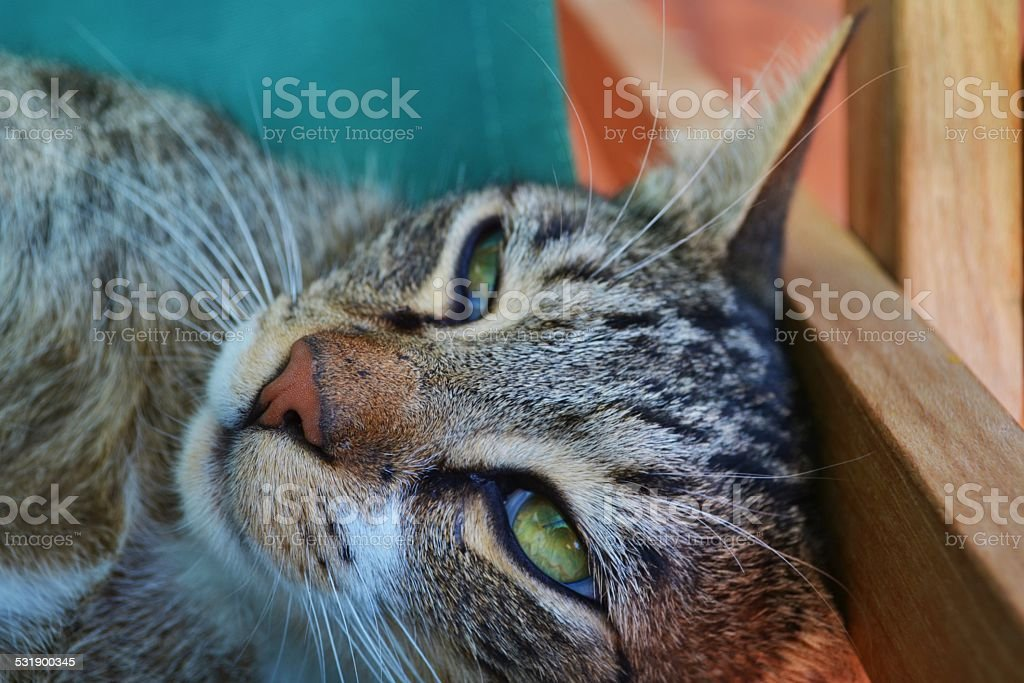 Animali domestici. Gatto stock photo