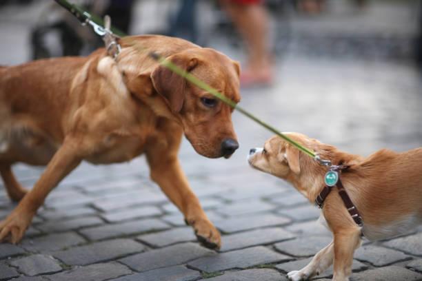 Haustiere zum Spaziergang – Foto