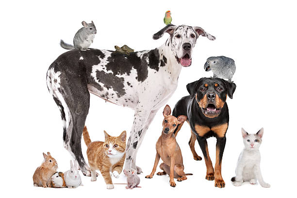 Pets in front of a white background stock photo