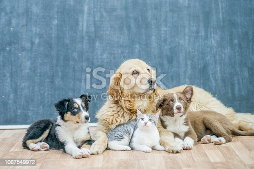 Three dogs and a cat lie comfortably together on a wooden floor in a room.