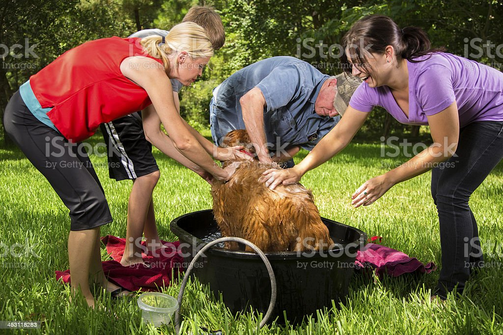 Pets: Multi-generation family gives dog a bath. Backyard.  Summer. royalty-free stock photo