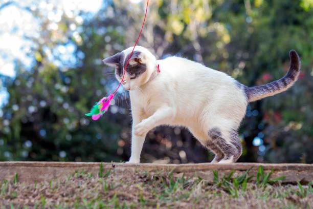 Pets of my life picture id1283486150?b=1&k=6&m=1283486150&s=612x612&w=0&h=um8md0un5mmksmzjaiar1x7fhz6flczyssbpmdzec3s=