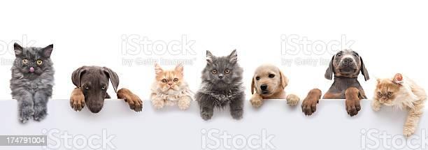 Pets picture id174791004?b=1&k=6&m=174791004&s=612x612&h=qqll781 hlgwtw9i4fsvwuxmqvvsb1p628vk5d6 ork=