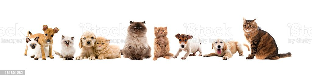 pets royalty-free stock photo