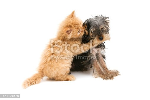 young cat and dog are playing on white