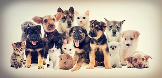 Haustiere erlaubt – Foto