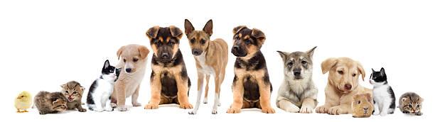 Pets picture id513393035?b=1&k=6&m=513393035&s=612x612&w=0&h=py0ejjsepv7elw6phlolpnriidxtzipzvnf0wi8cnk8=