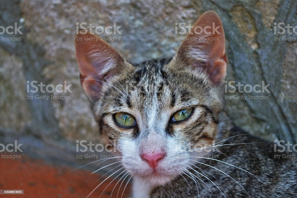 Animali domestici stock photo