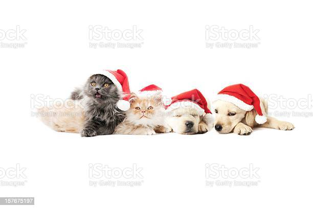 Pets santa claus picture id157675197?b=1&k=6&m=157675197&s=612x612&h=ya7drn8durvvmucyngxbsws7tfaxqjniikcp2luxk84=