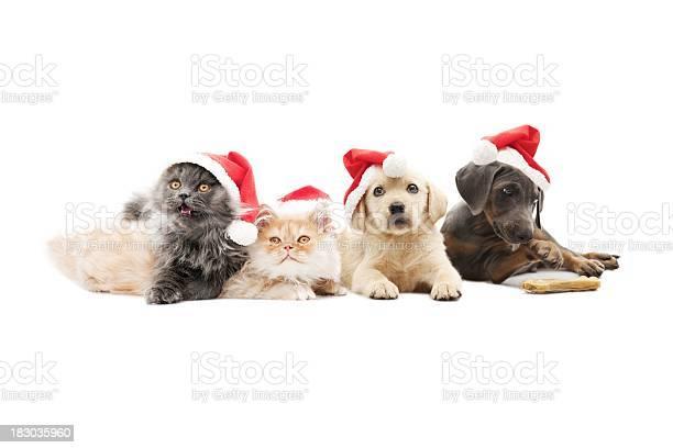 Pets santa claus picture id183035960?b=1&k=6&m=183035960&s=612x612&h=amgacudgjsvpd9arufilvrl94nupquqsz9qia5tpmmk=