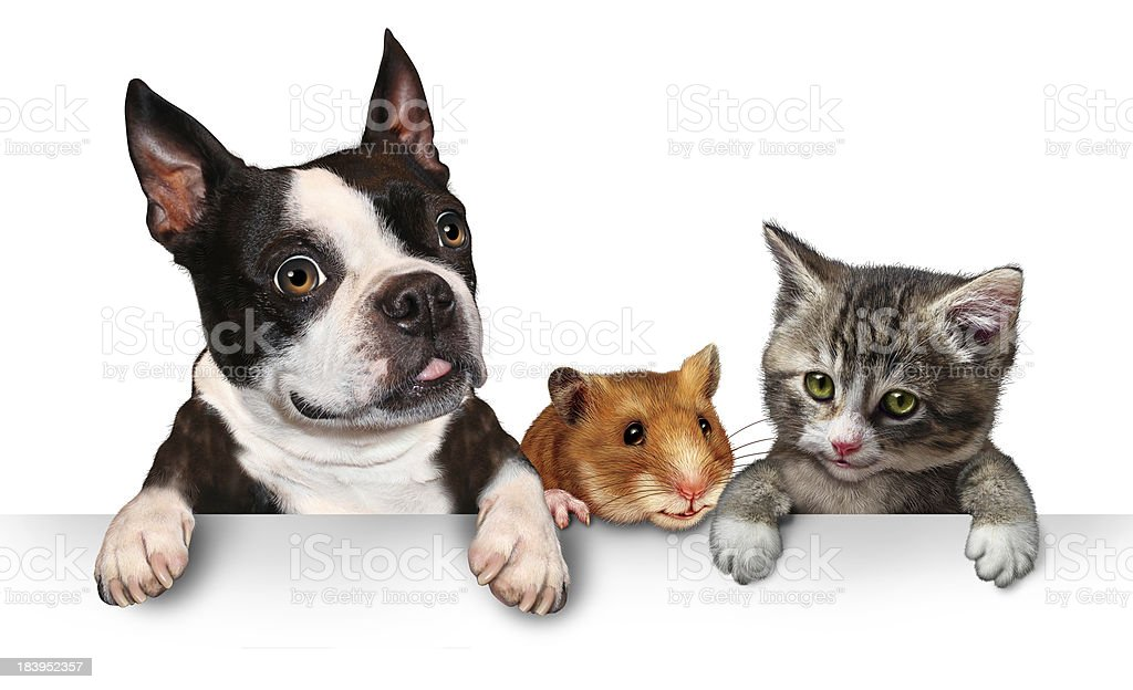 Pets Sign stock photo