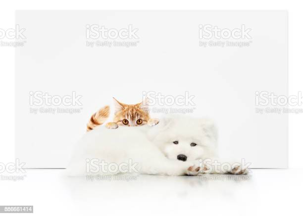 Pets store signboard with cat and dog together on white background picture id886661414?b=1&k=6&m=886661414&s=612x612&h=c96plkaqxq9poluiopi5eybns8obinha8kfcyn0z rc=