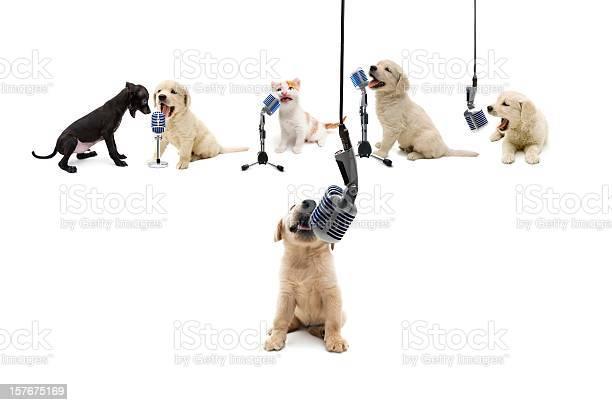 Pets vocalist picture id157675169?b=1&k=6&m=157675169&s=612x612&h=5yipvtcfllqwmunuq maifohvyhitabx 79jx8kgax4=