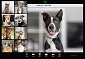 istock Pets Working From Home Video Conference 1284988838