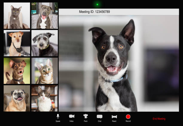 Pets working from home video conference picture id1284988838?b=1&k=6&m=1284988838&s=612x612&w=0&h=r3bfw6qcwh4ydfmpojhqbsphvtszlwvyojydxogdvd4=