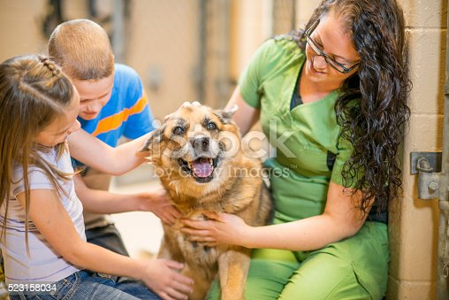 istock Petting a Dog at the Shelter 523158034