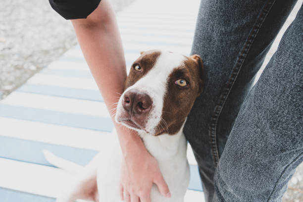 Petting a friendly homeless dog. stock photo