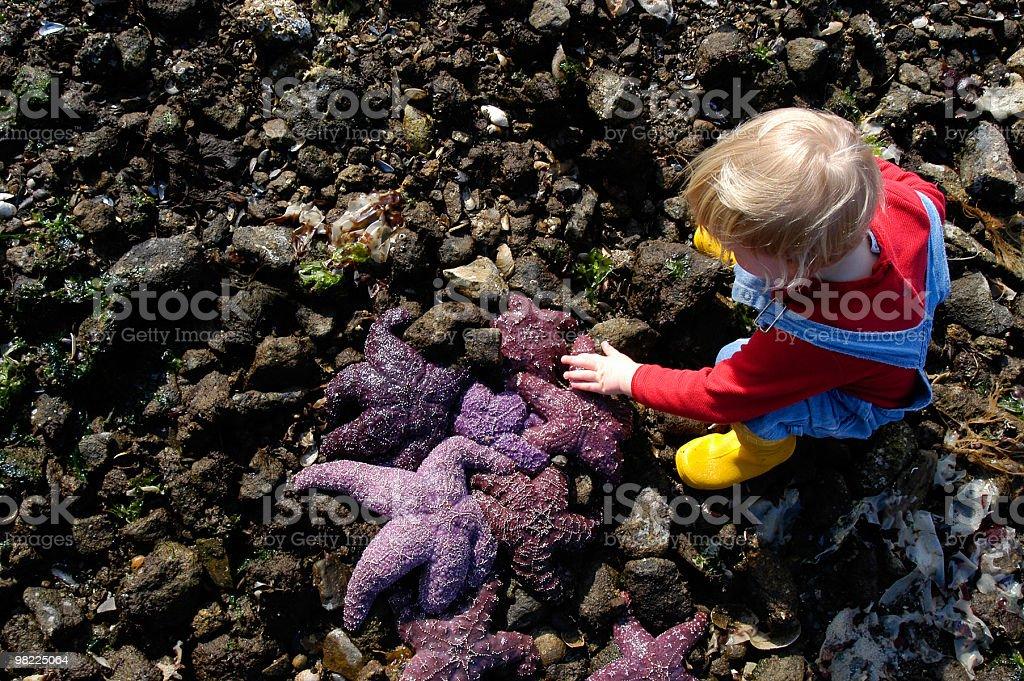 Petting the Starfish royalty-free stock photo
