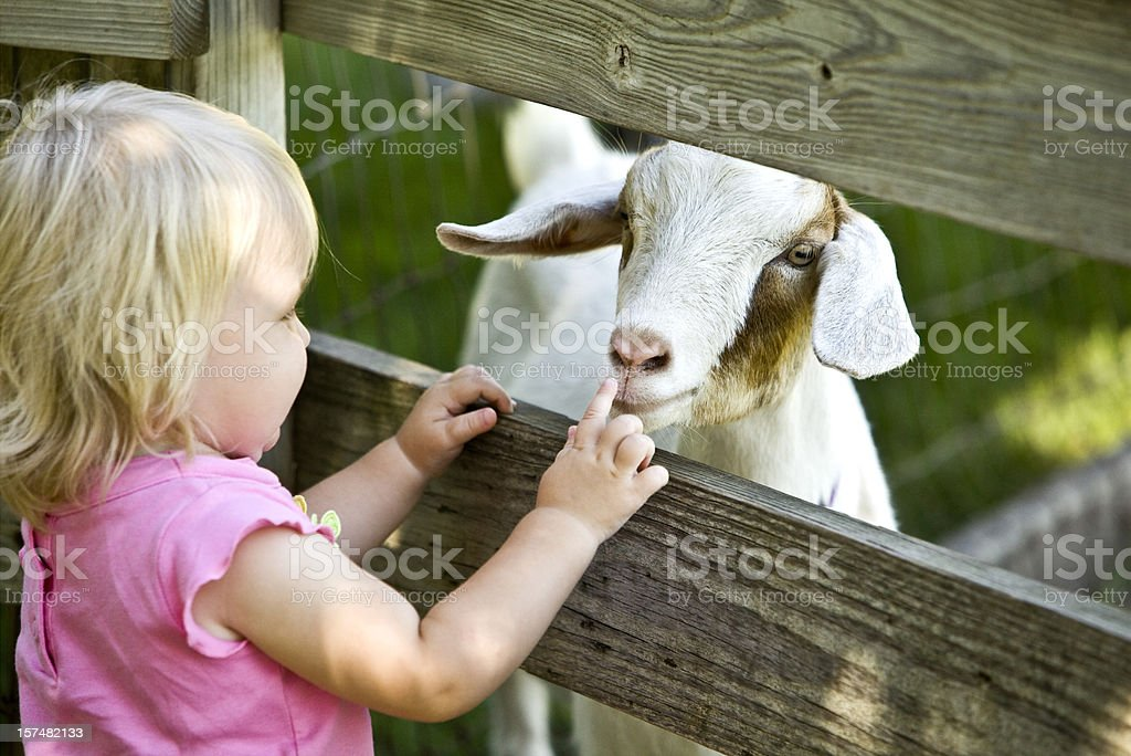 Petting Zoo Child and Goat royalty-free stock photo