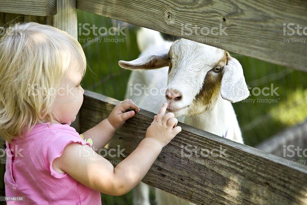 Streichelzoo für Kinder und Ziegenleder – Foto