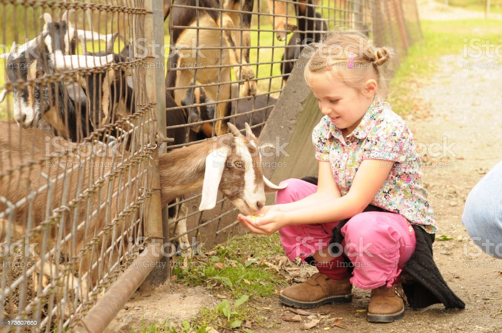 petting zoo stock photo