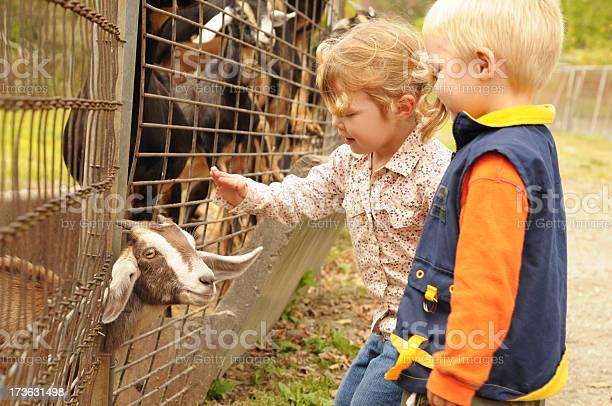 Petting zoo picture id173631498?b=1&k=6&m=173631498&s=612x612&h=z zqe yndde1szo3fqpeoo2l7mmm0yzcqiq eh7e8xo=