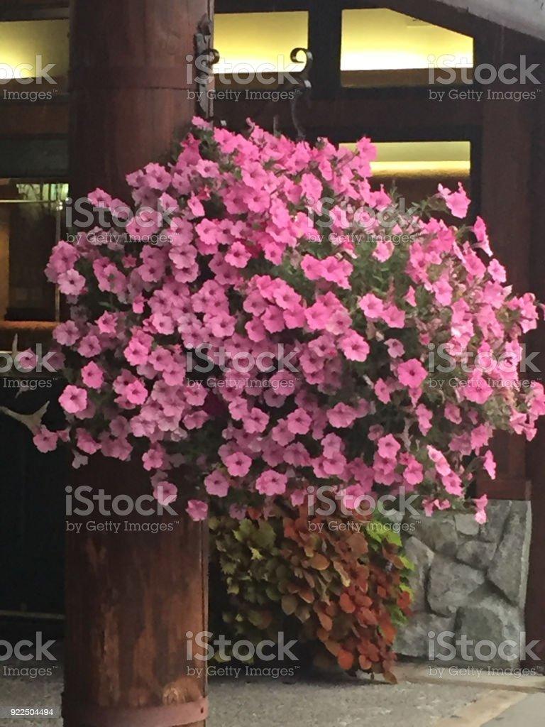 Petunias on a post stock photo